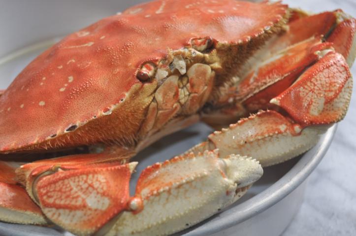 crab.bennedict-0016